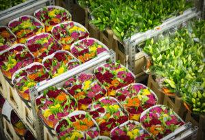 sierteeltsector criminaliteit