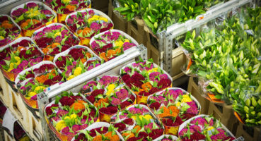 Holland Flower Alliance